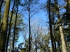 Forest near Goring