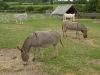 Donkey sanctuary