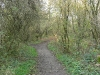 Maidenhead thicket