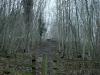 Bisham wood