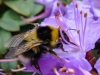 bee2_scale
