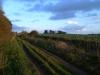 Ridgeway Rainbow