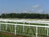 York racecouse