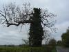 Weird tree 2