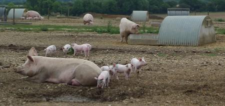 piggy1_scale