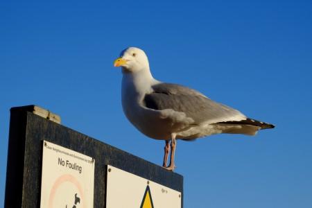 gull1_scale