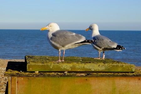 gull2_scale