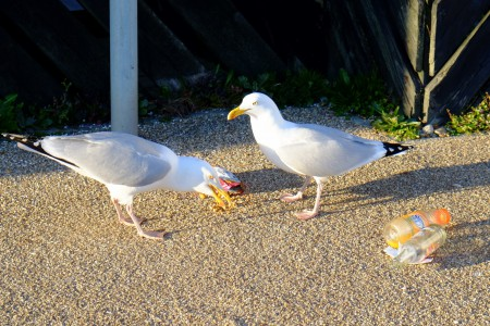 gull3_scale