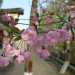 flower2_scale