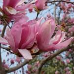 flower5_scale