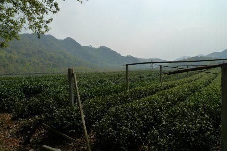 tea_museum_scale